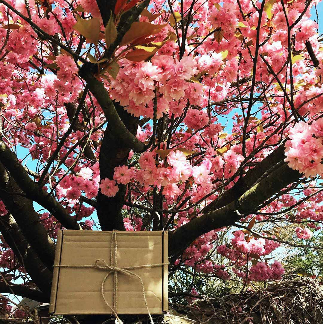 wellbeing gift box by tree in blossom